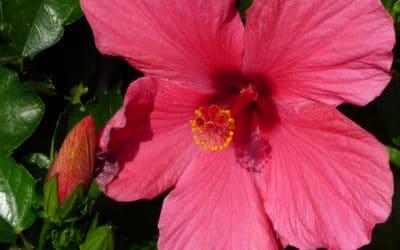 Concours des maisons et jardins fleuris